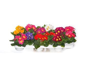 Centros para funerales: Productos de FLORISTERÍA CASA BASUSTA