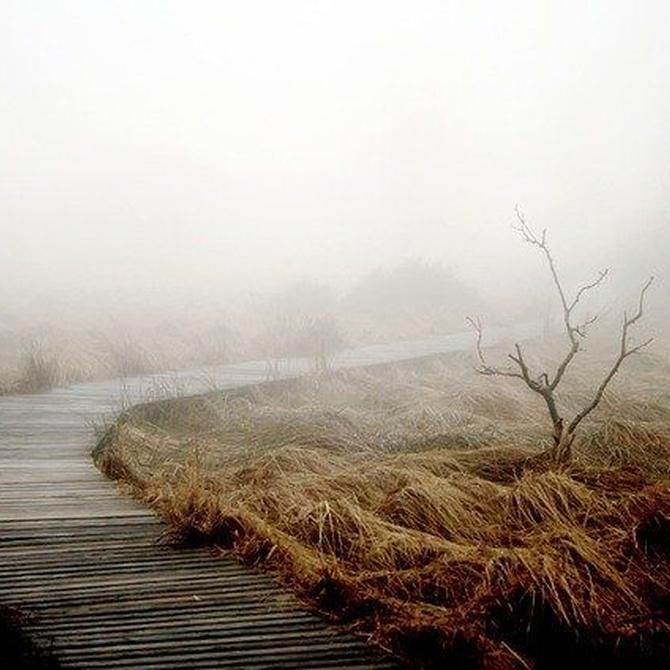 La madera y la humedad: ¿son enemigos?