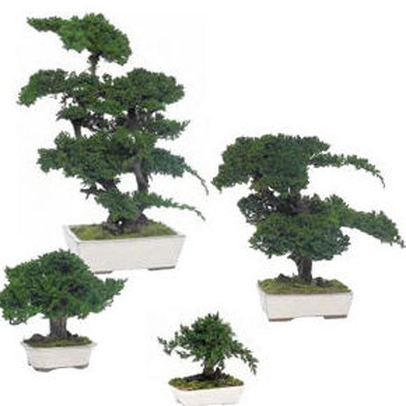 Árboles preservados: Servicios de Concept Decoración