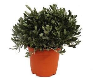 Arbusto exterior