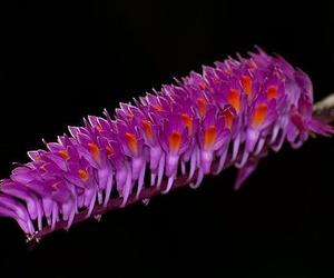 Plantas - Navaflor