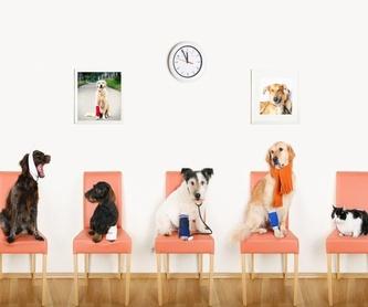Peluquería felina y canina: Servicios de Centro Veterinario Iruelas