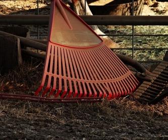 Podas de árboles: Servicios de Interjardín