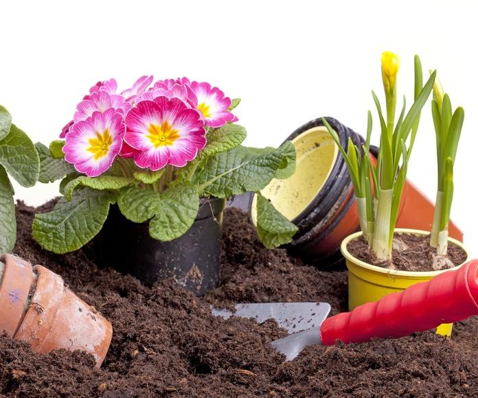 Limpieza de jardines: Servicios de Silva Multiservicios