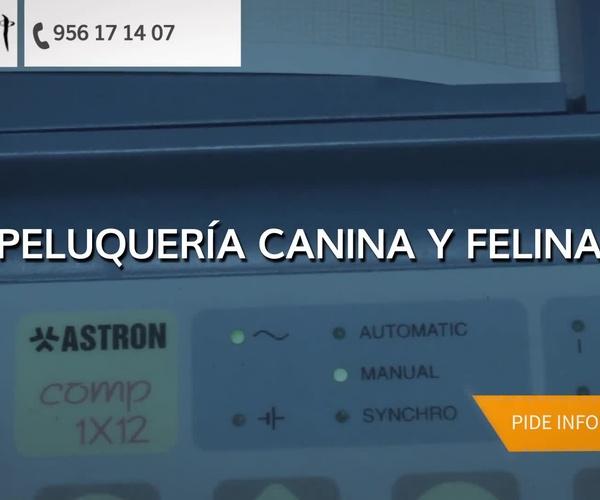 Clínica veterinaria en La Línea de la Concepción | Centro Veterinario Albatros