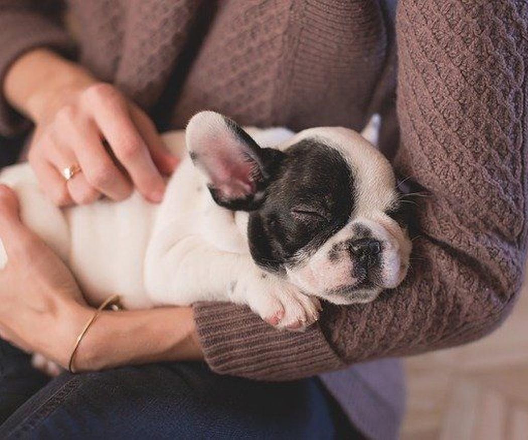Enfermedades congénitas de los perros