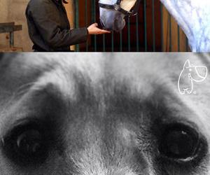 Especialistas en terapias con animales