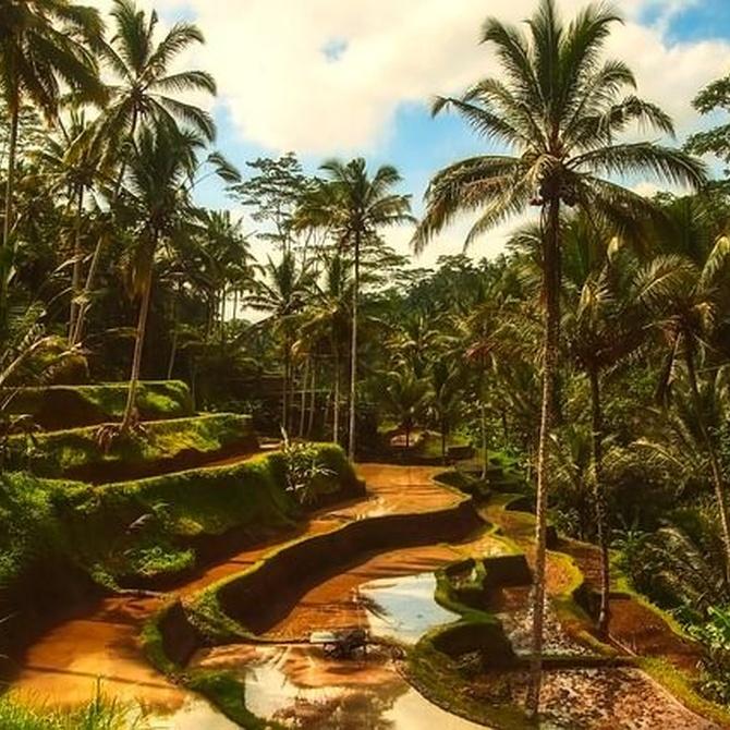 Curiosidades sobre las palmeras que quizá no sabías