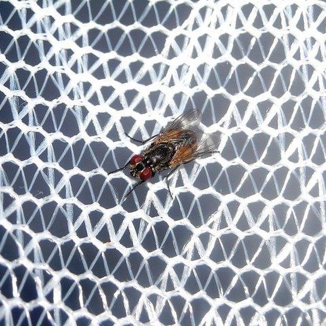 Las ventajas de instalar una mosquitera