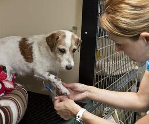 Hospital veterinario abierto las 24 horas en Sevilla