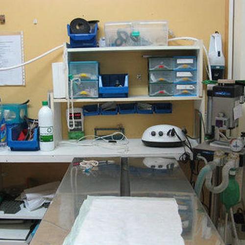 Cirugía y hospitalización de perros y gatos en Sabadell