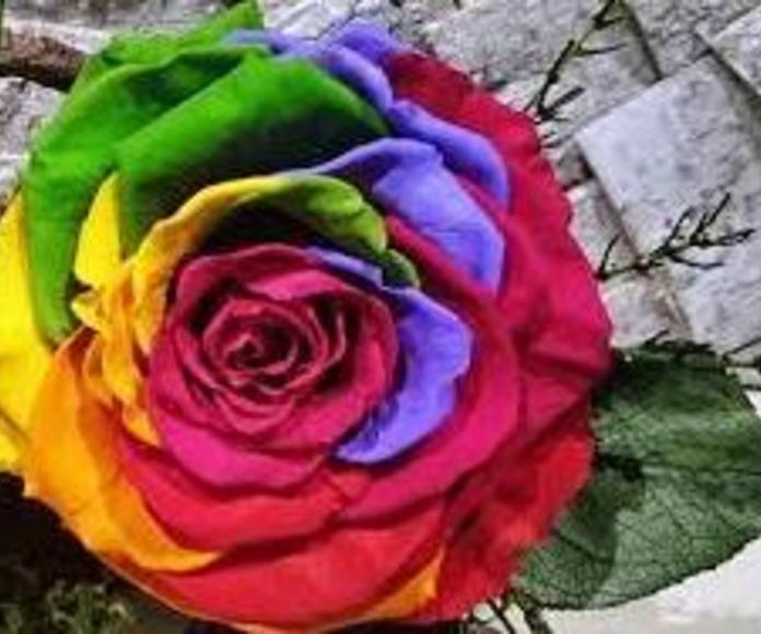 Rosa Preservada Arco Iris: Nuestras flores de Bouquet Flores y Plantas