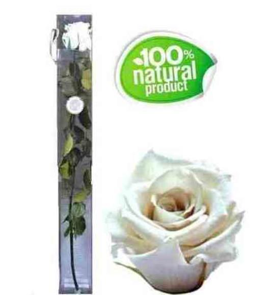Rosa blanca eterna : Catálogo de Regalos de Floresdalia.com