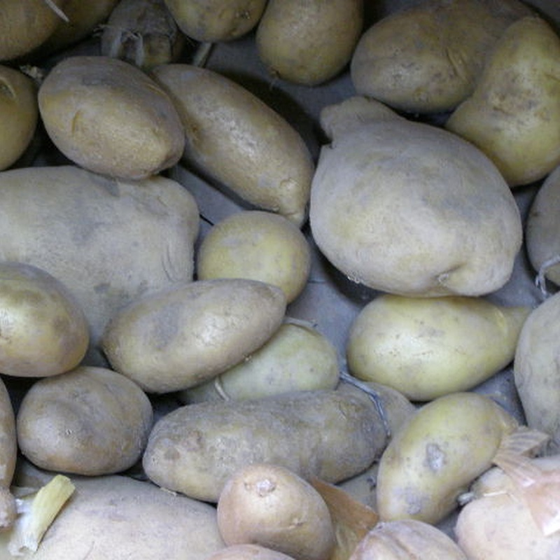 Patatas de    Cubillas de Santa Marta    Valladolid