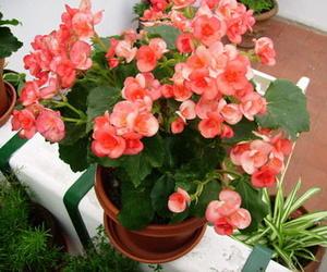 Todos los productos y servicios de Floristerías: Arte y Jardín