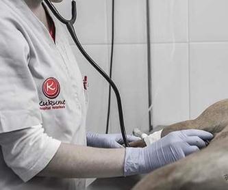 HOMEOPATÍA: Servicios y tratamientos de Centro  Veterinario Kukume