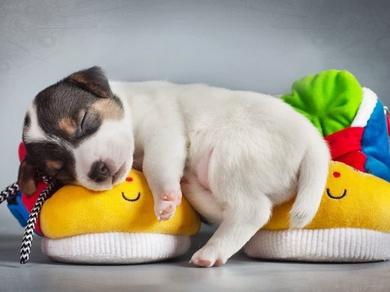 ¿Los perros sueñan?