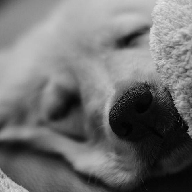 Los cuidados de las mascotas y cómo protegerlas del frío
