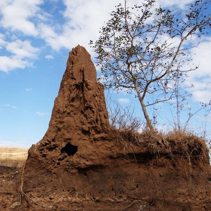 Mitos sobre las termitas