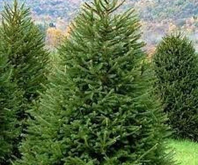 Semillas de pino: Productos de Maquinaria El Casar