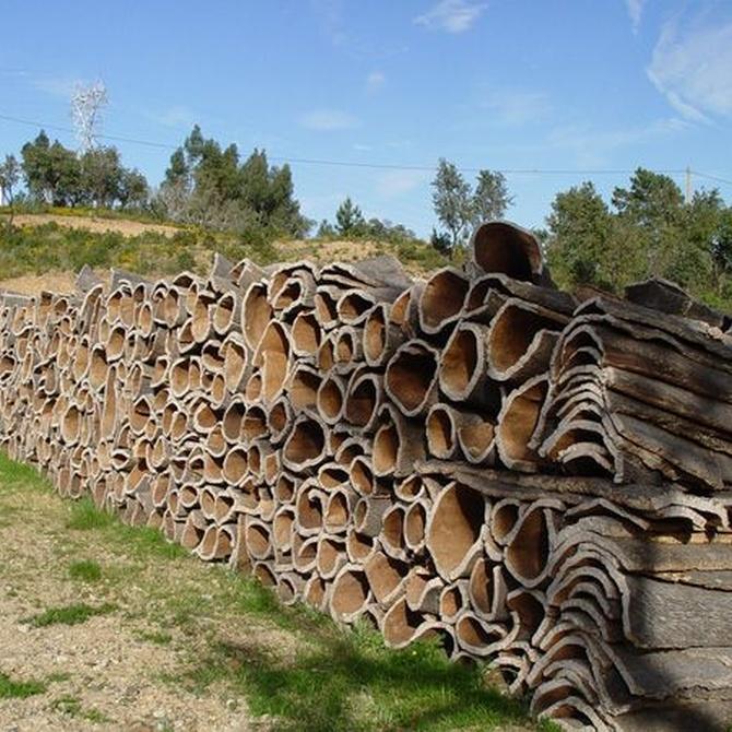 El estado de la silvicultura en España