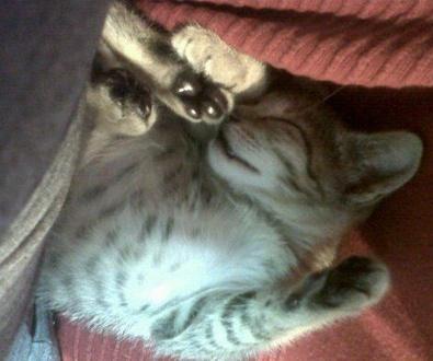 La Llegada de un Gatito