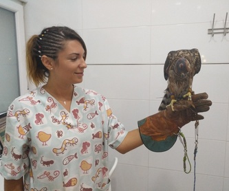 Servicio a domicilio: Servicios de Clínica Veterinaria Llíria