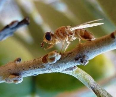 En verano hay muchos bichos que pican. Aprende a diferenciarlos.