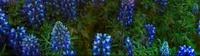 Trabajos: Catálogo de Garden Rivas Flores y Plantas