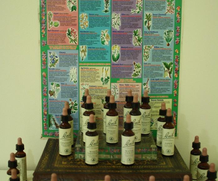 Flores de Bach: Terapias de Mallesta Centro de Especialidades