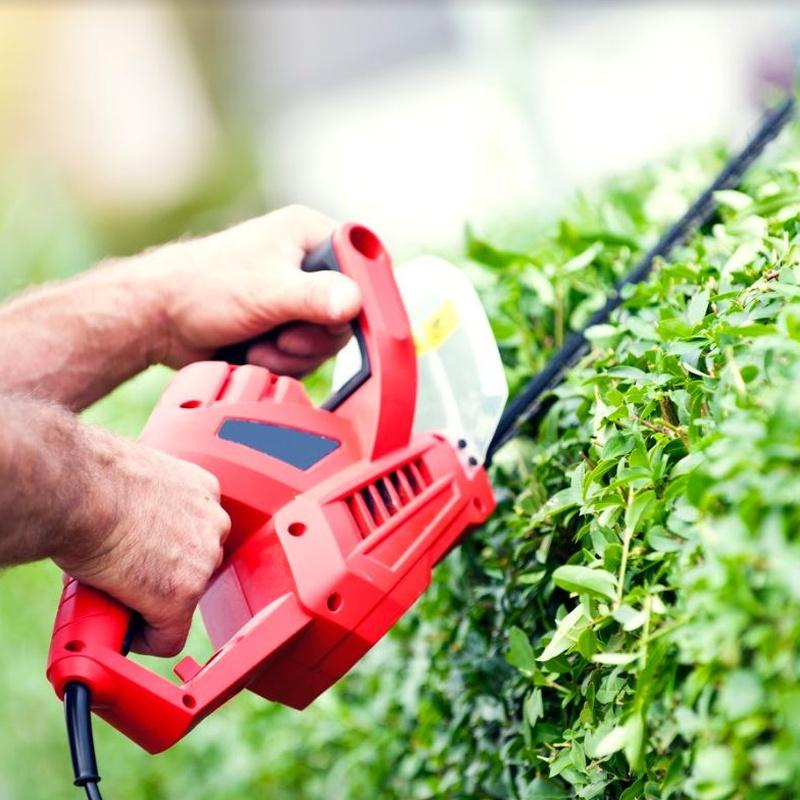 Poda: Servicios de Jardinería Pozo