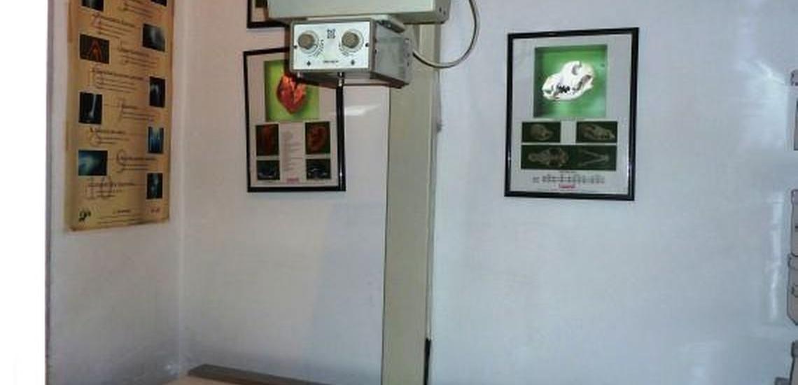 Clínica veterinaria en San Blas, Madrid, con diagnóstico por imagen