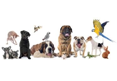 Cuidados básicos de tu mascota