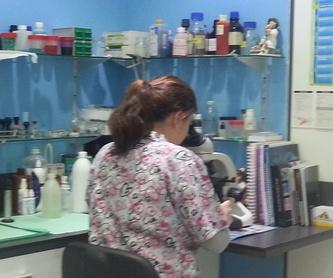 Microchips: Servicios de Clínica Veterinaria Ricardo Díez Reyero