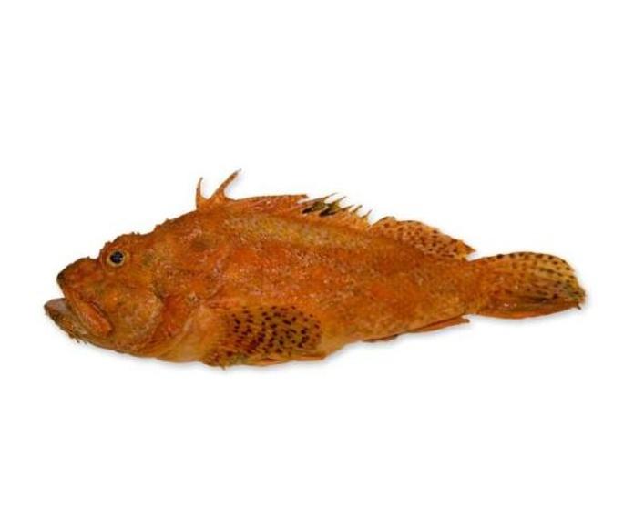 Peces de costa: Productos y Servicios de Peixes Vimar