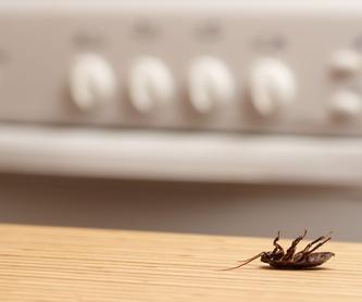 Desinfecciones: Servicios de OIARSO CONTROL DE PLAGAS