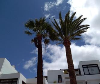 Riego, instalación y mantenimiento: Servicios de Palmito Palms And Gardens
