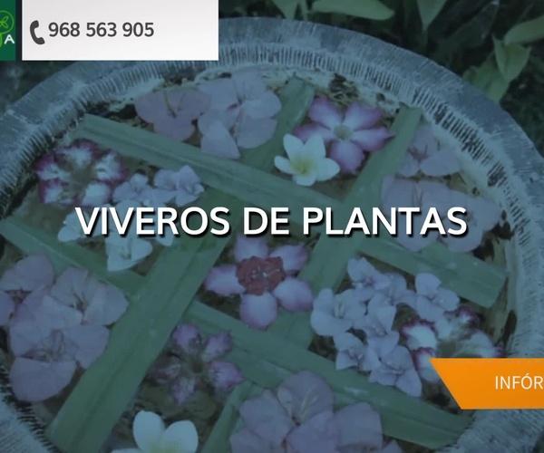 Viveros de jardinería en Cartagena | El Vivero de Maruja