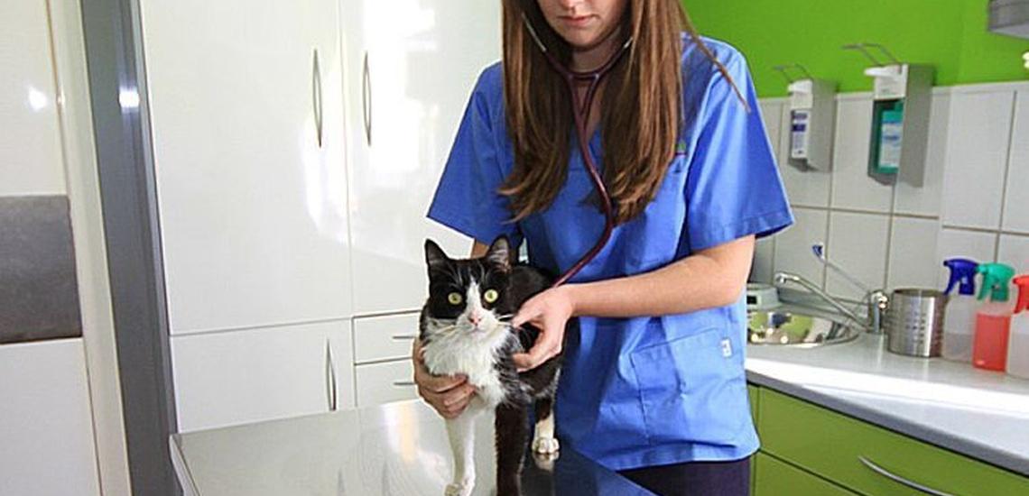 Clínica veterinaria en Torremolinos | Clínica Veterinaria Vetsur