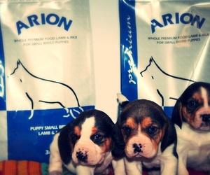 Piensos para cachorros en Burgos
