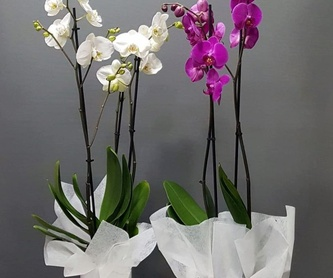 Ramo Amazonas: PRODUCTOS de Flores Madrid