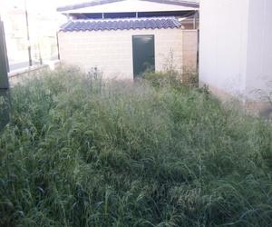 Proyecto paisajismo Ches Pa, antes/después y pasados los años en jardín particular.........