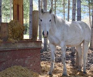 Talleres de acercamiento al caballo