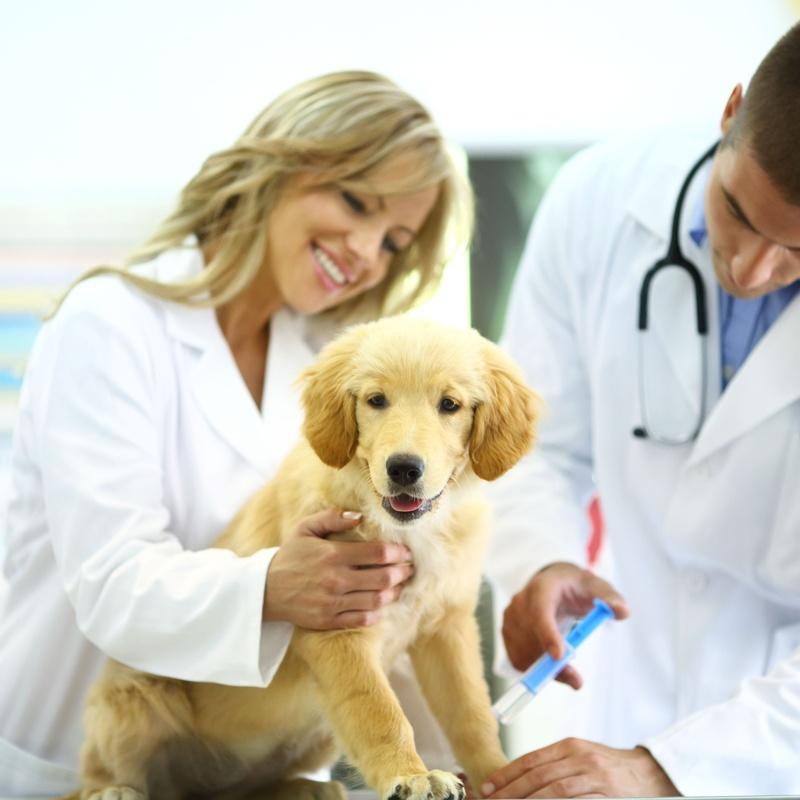 Análisis clínicos: Servicios de Centro Veterinario Esteruelas