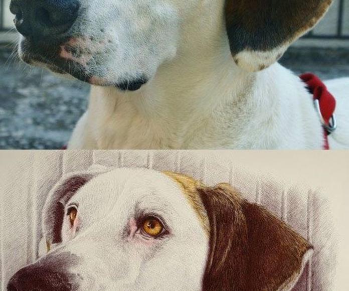 Retratos de mascotas a bolígrafo