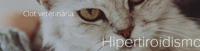 Hipertiroidismo e hipertensión felina