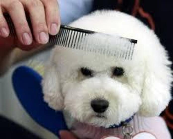 Peluquería canina: Nuestros trabajos de Animals Ca la Ruth