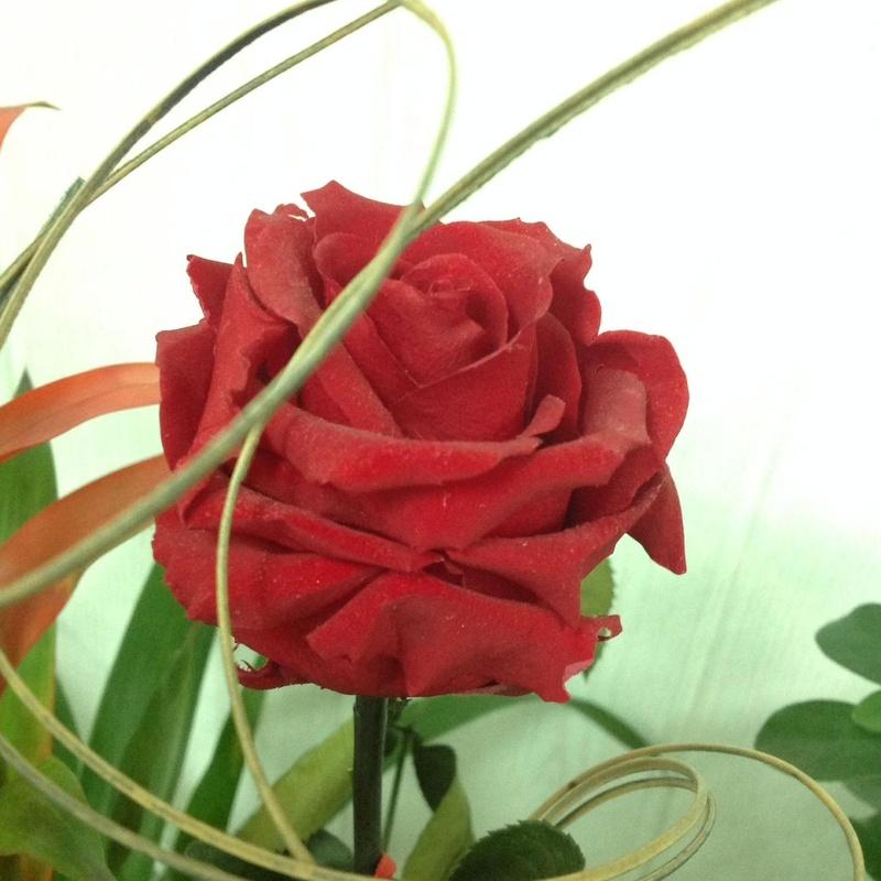 Rosas Eternas ¿las conoces?