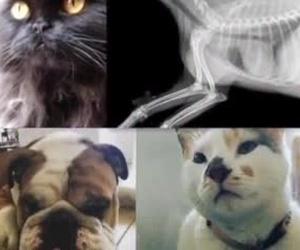 Ultima tecnología en Radiologia digital