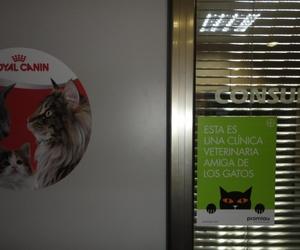 Consulta de gatos